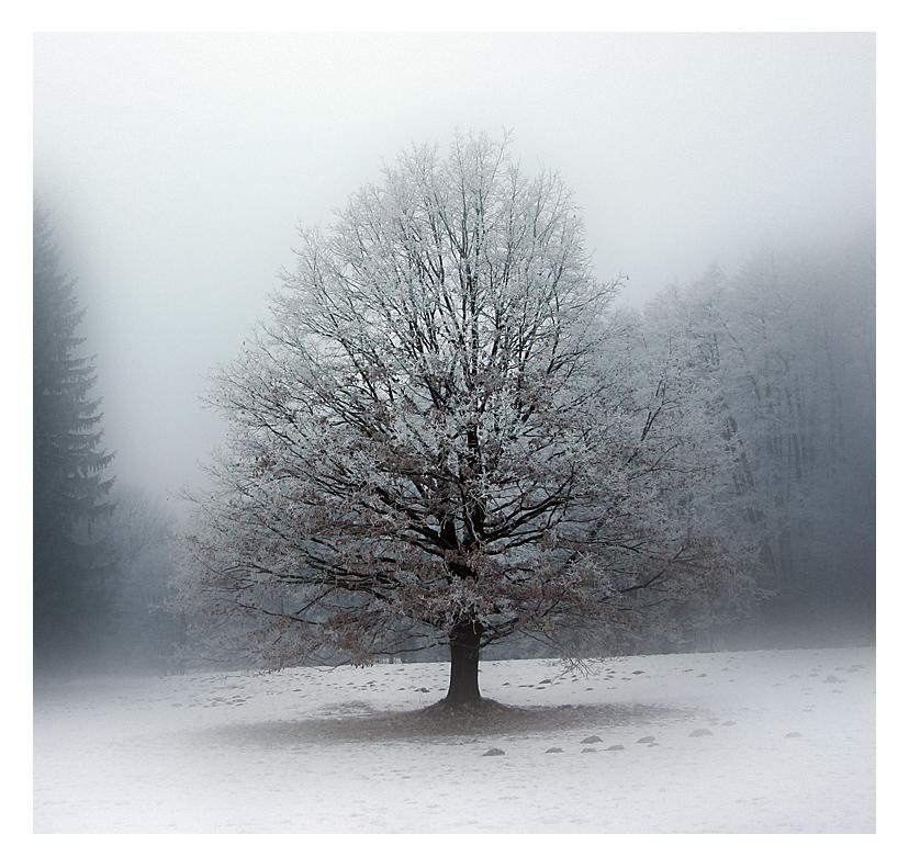 Einsam im erster Schnee