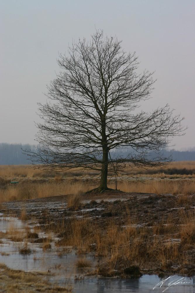 Einsam im Moor 1