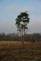 Einsam im Moor 3