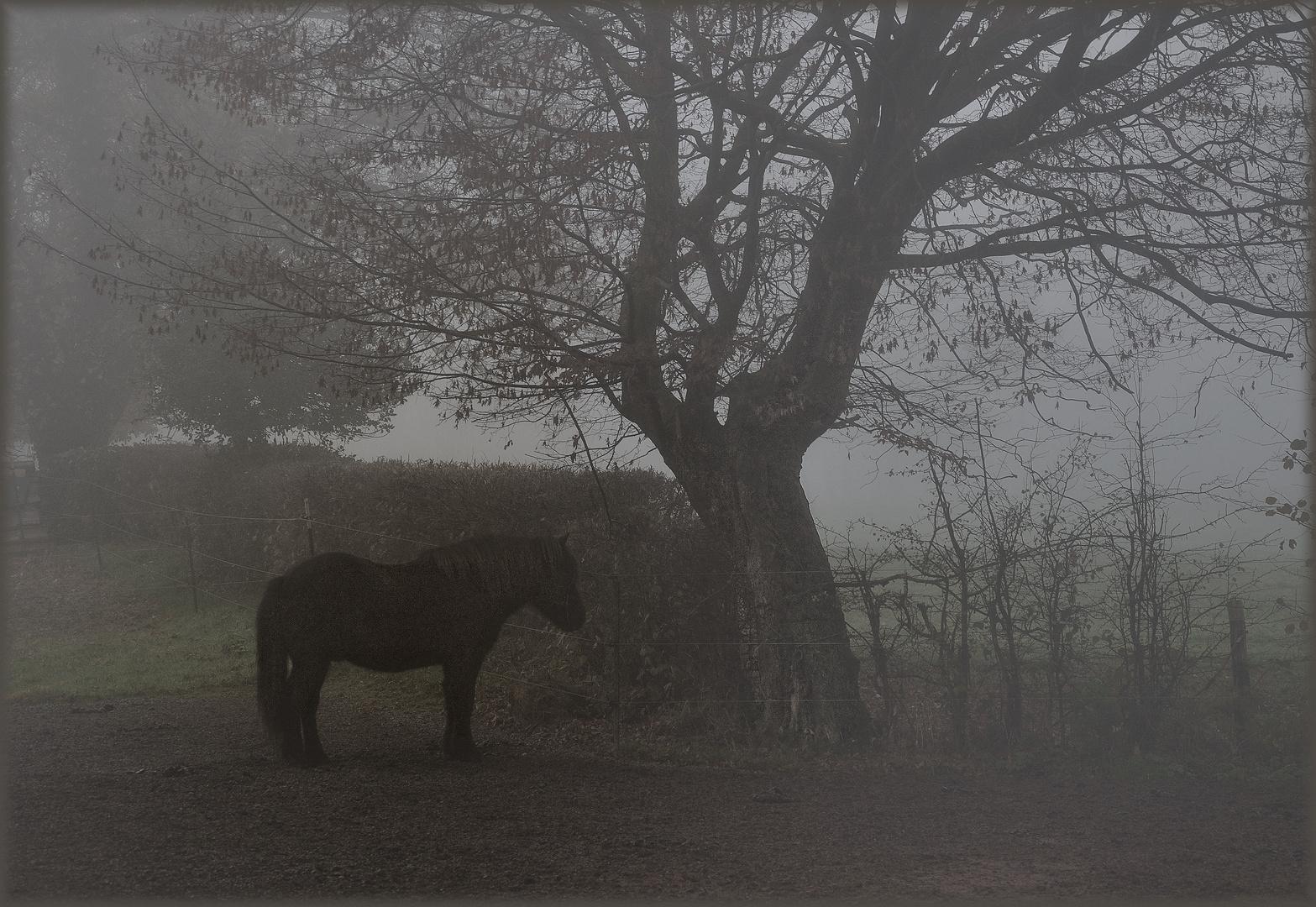 Einsam im Nebel...