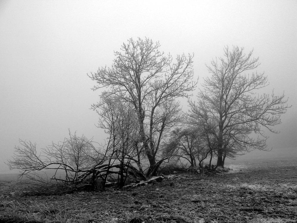 Einsam im Nebel II