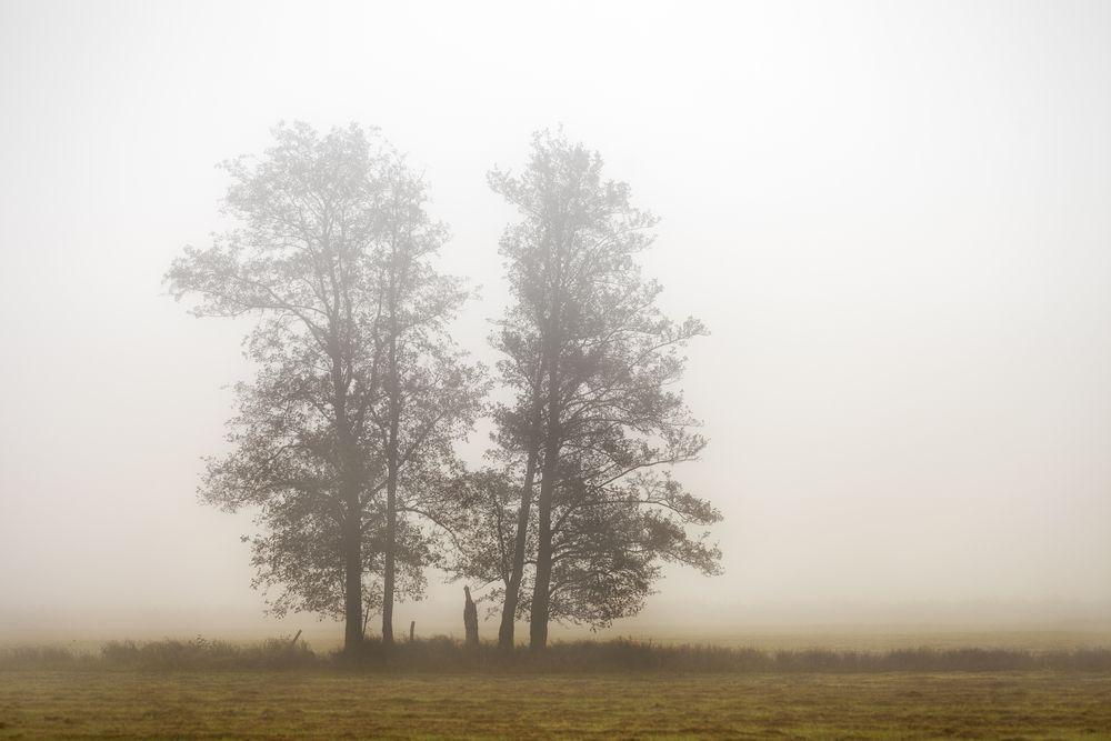 einsam im Nebel © Matthias Buehner