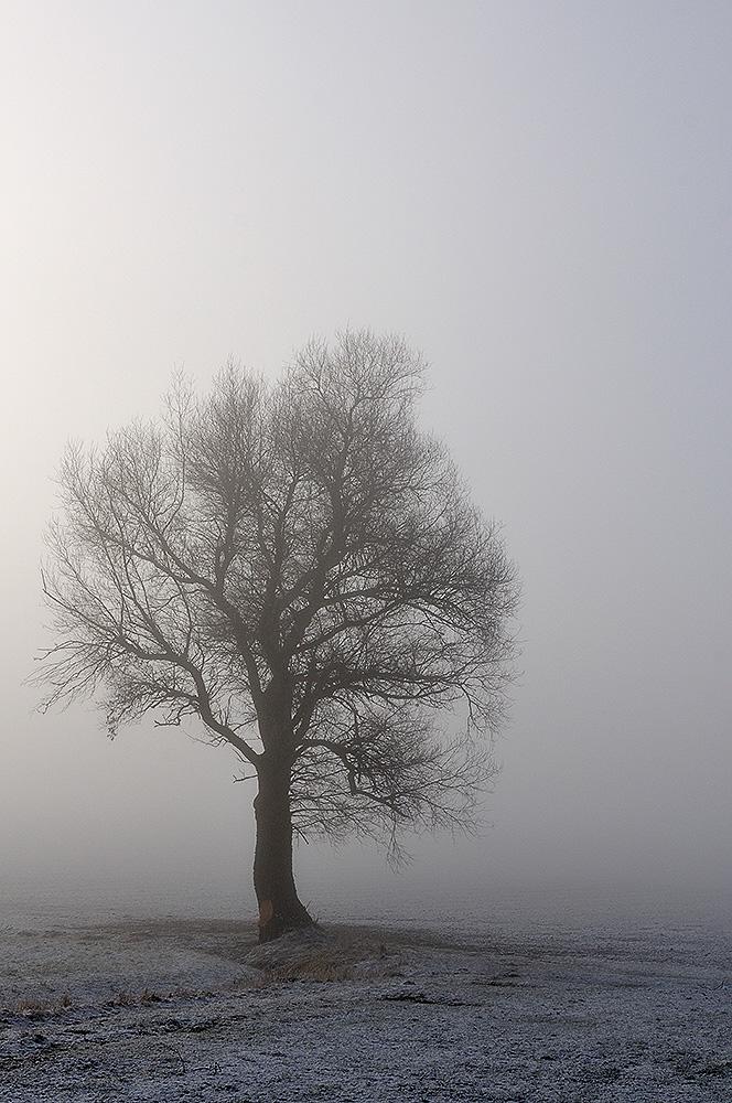 Einsam im Nebel steht er da