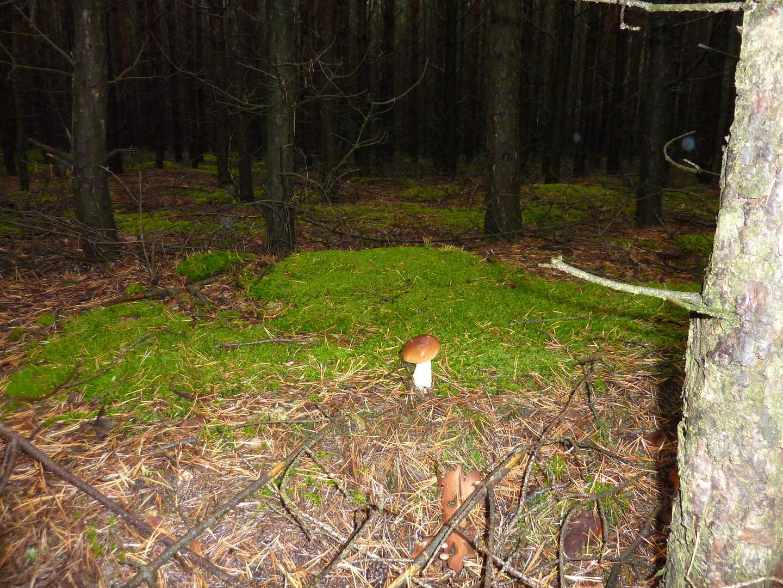 Einsam im Wald