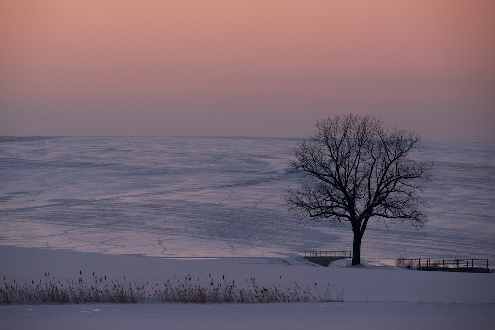 einsam in der Wintersonne
