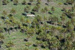einsam unter Palmen...