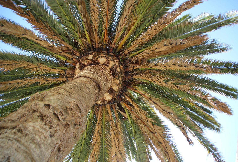 Einsam unter Palmen