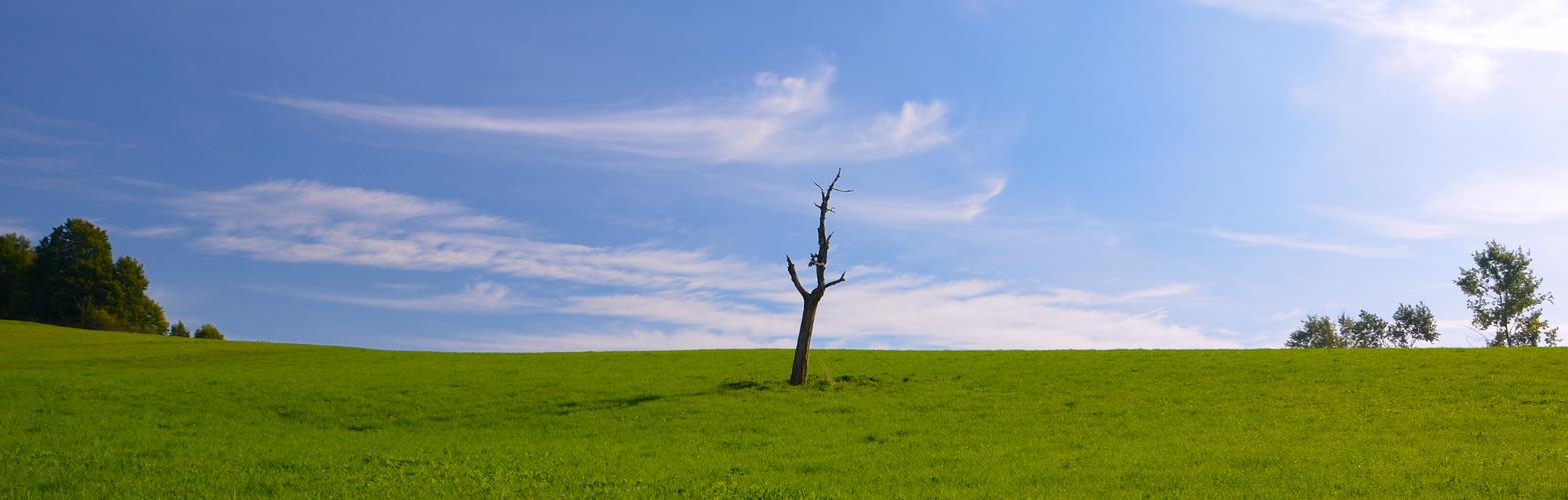 Einsam vor Wolken