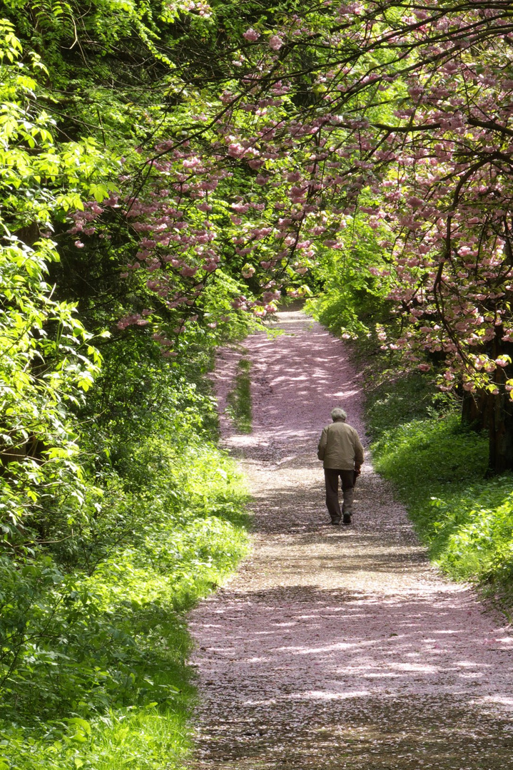 Einsam Wandern
