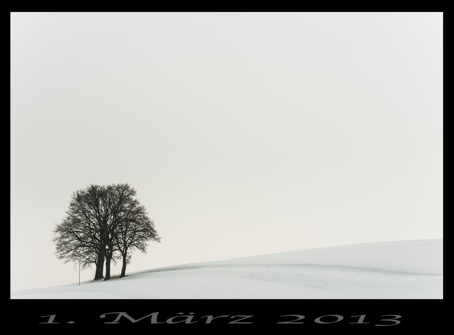 Einsame Baumgruppe