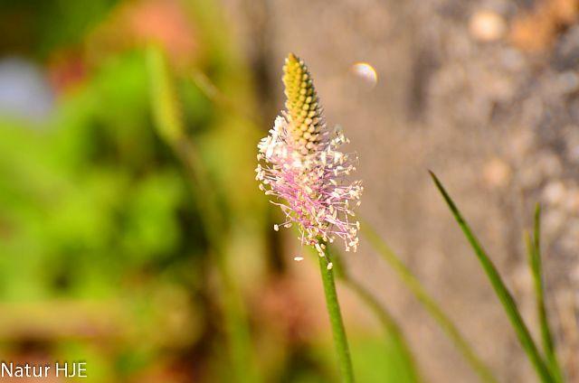 Einsame Blüte.