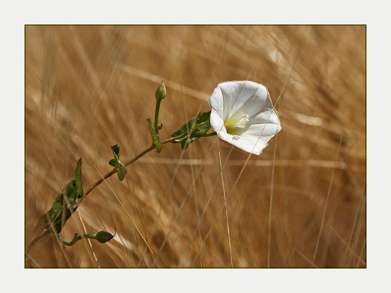 Einsame Blüte...