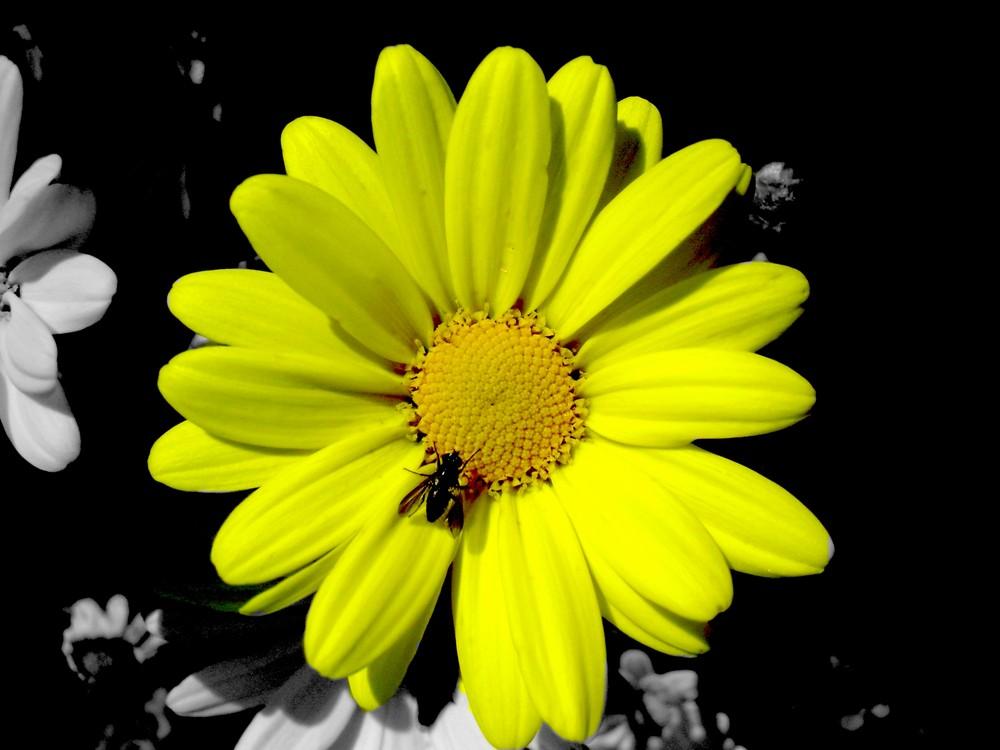 Einsame Blume.