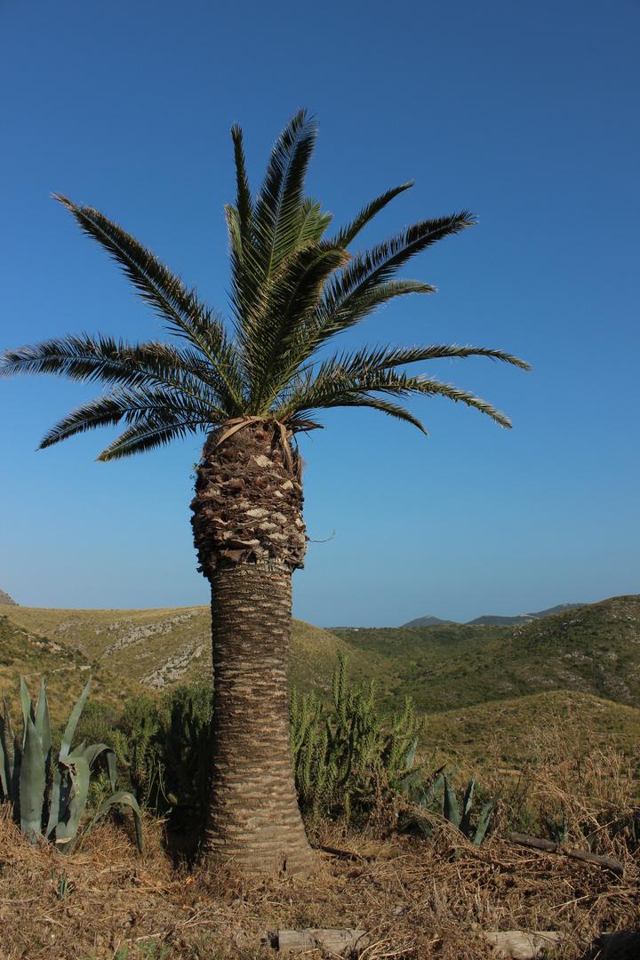 Einsame Palme