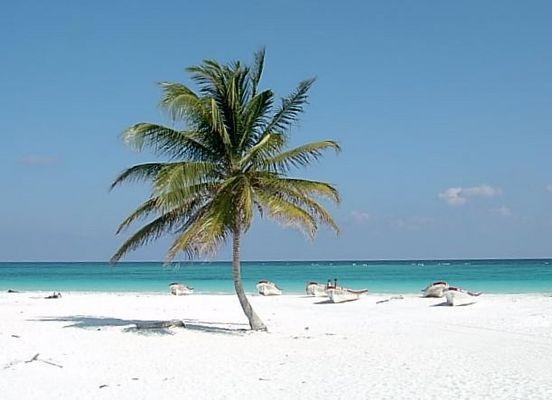 Einsame Palme am Strand - Nr.2