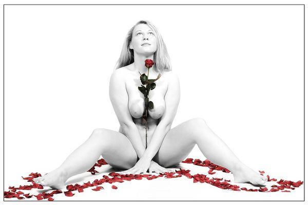 -einsame Rose-