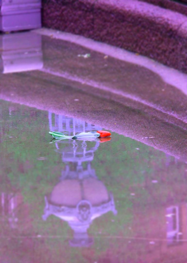 Einsame Tulpe 1