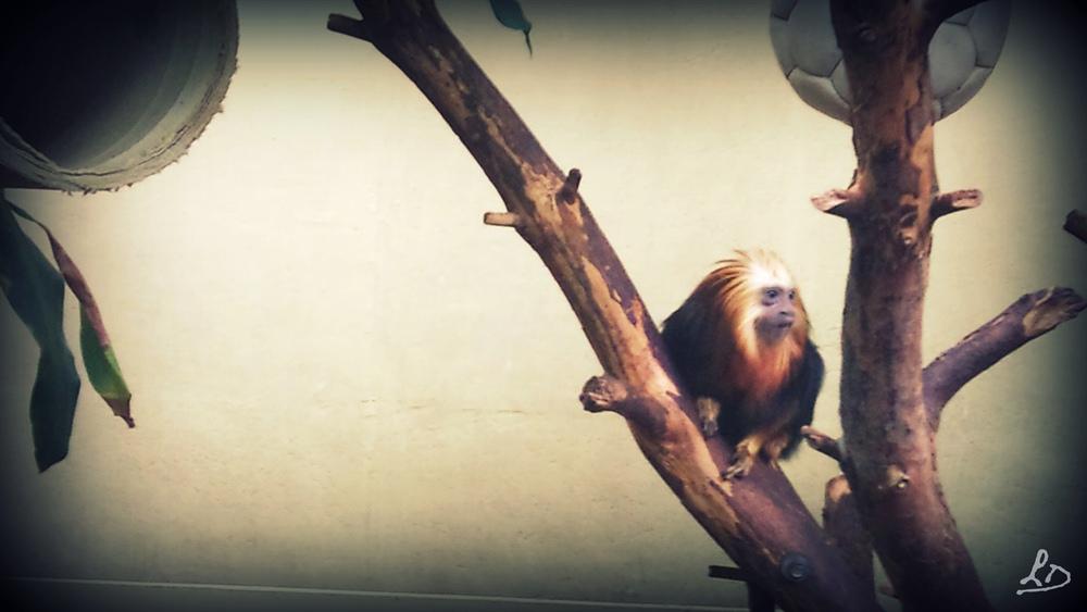 Einsamer Affe