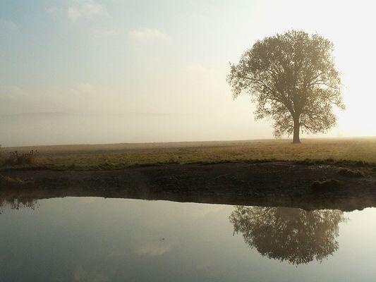 Einsamer Baum am Fluss