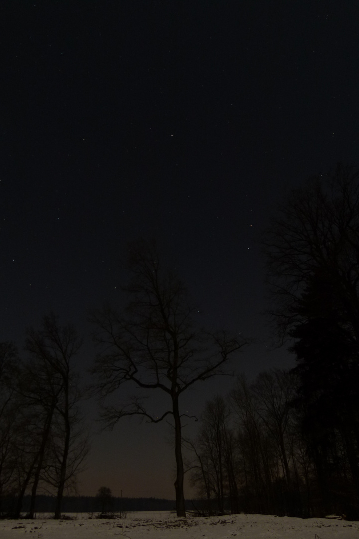 Einsamer Baum bei Nacht