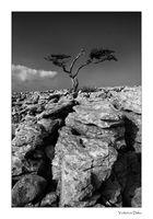 Einsamer Baum III