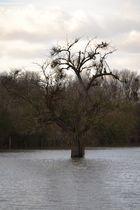 Einsamer Baum im Hochwasser