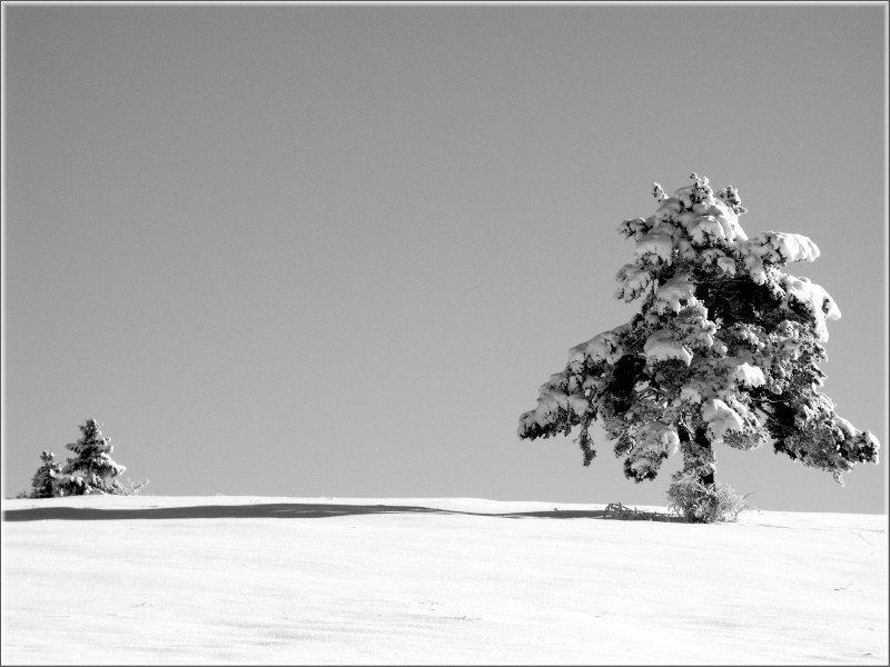 Einsamer Baum im Schnee