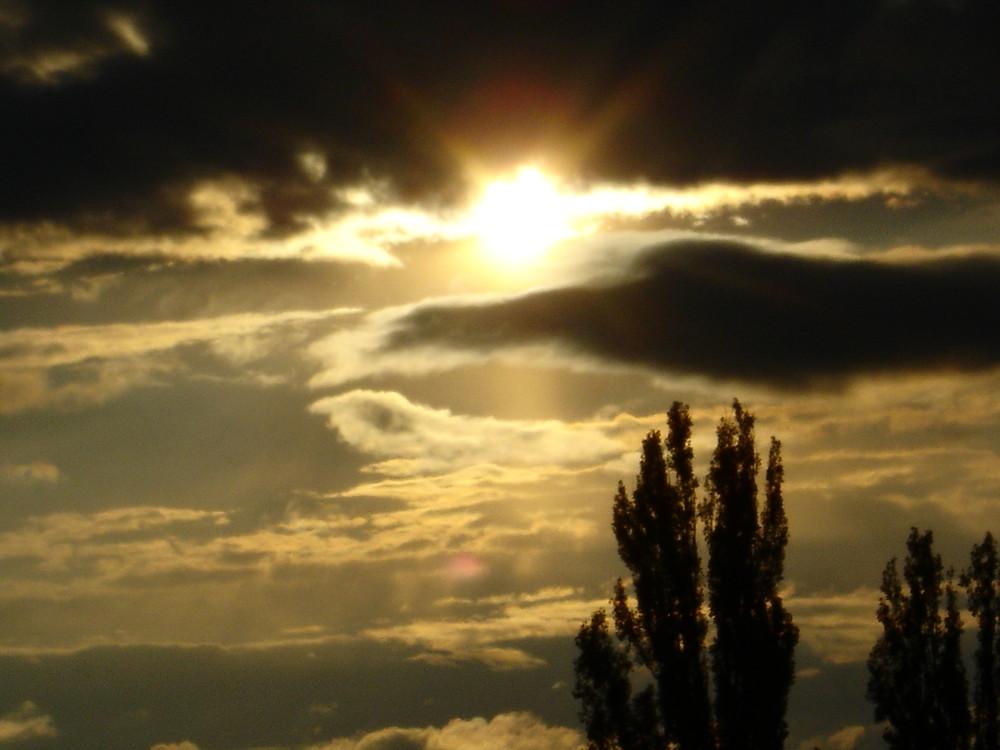 einsamer Baum in dem düsternen Licht der doch so hellen Sonnenstrahlen