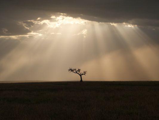 Einsamer Baum in der Masai Mara
