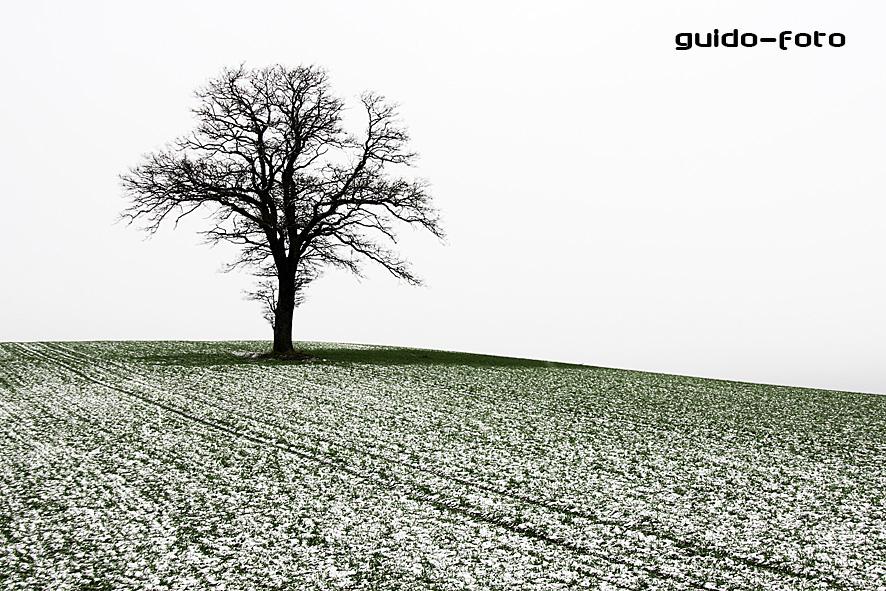Einsamer Baum in einsamer Landschaft