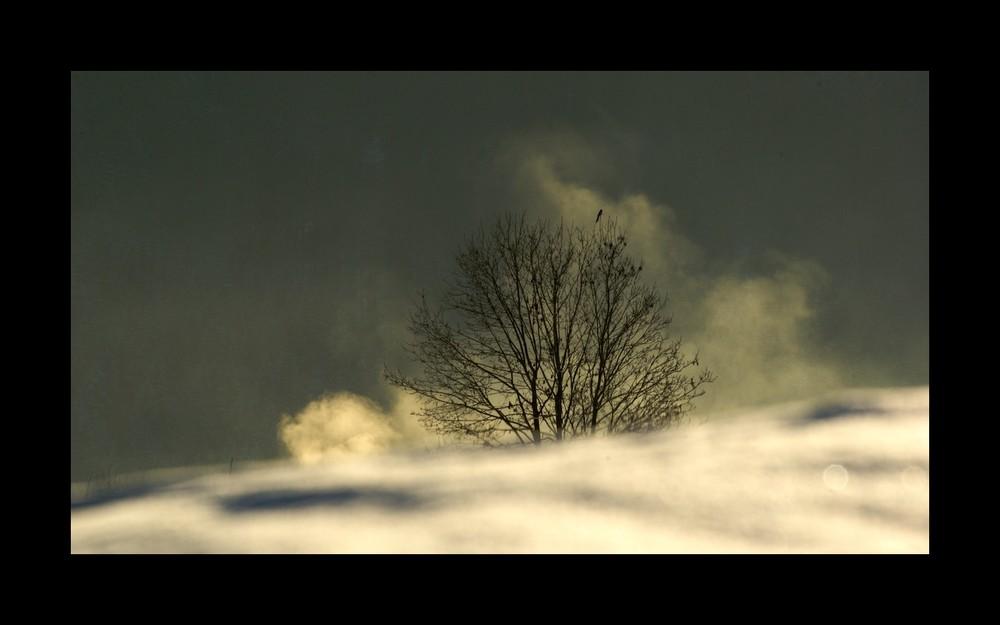 Einsamer Baum mit Vogel