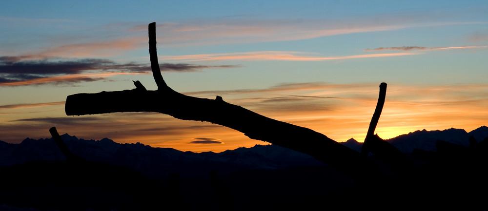 Einsamer Baumstamm - Sonnenuntergang Dolomiten