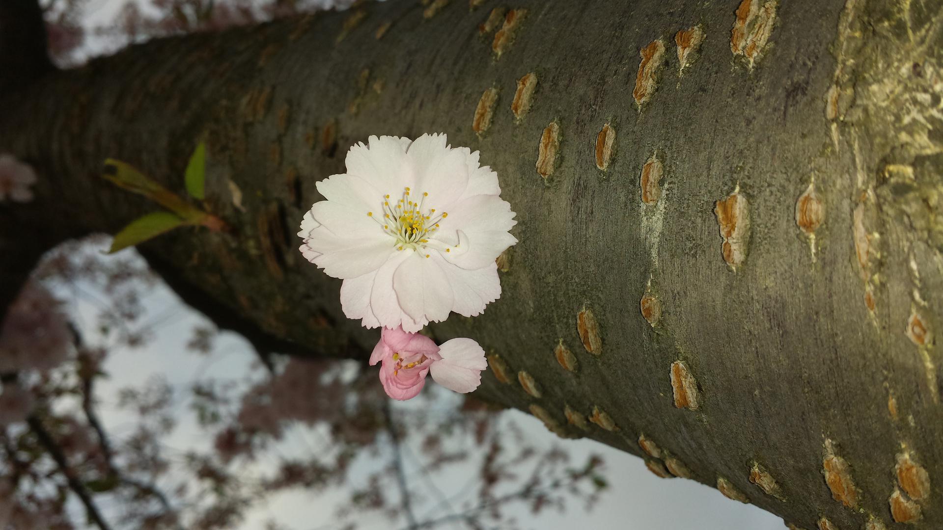 Einsamer Blütenzauber