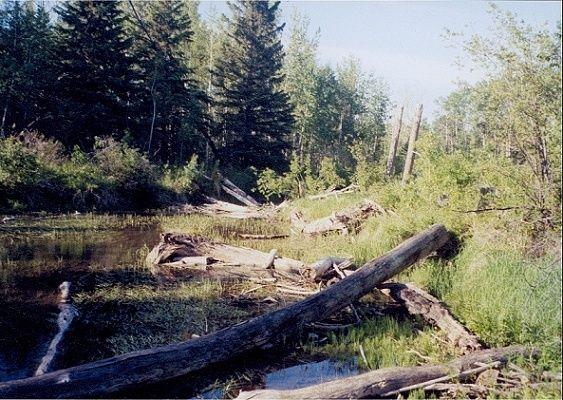 Einsamer Fluss