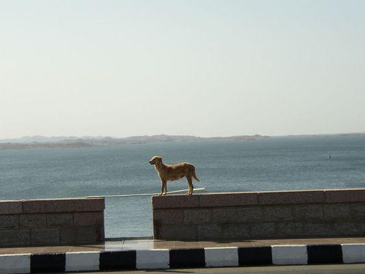 Einsamer Hund genießt Aussicht