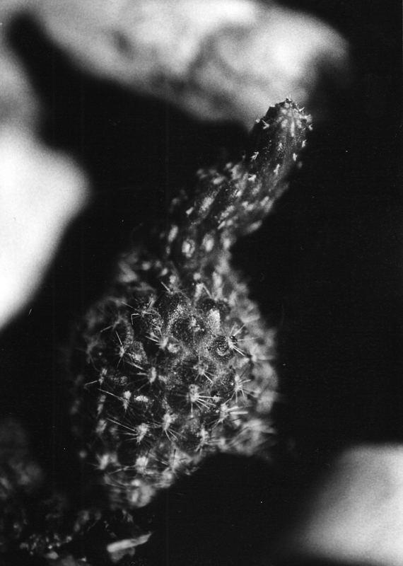 Einsamer Kaktus
