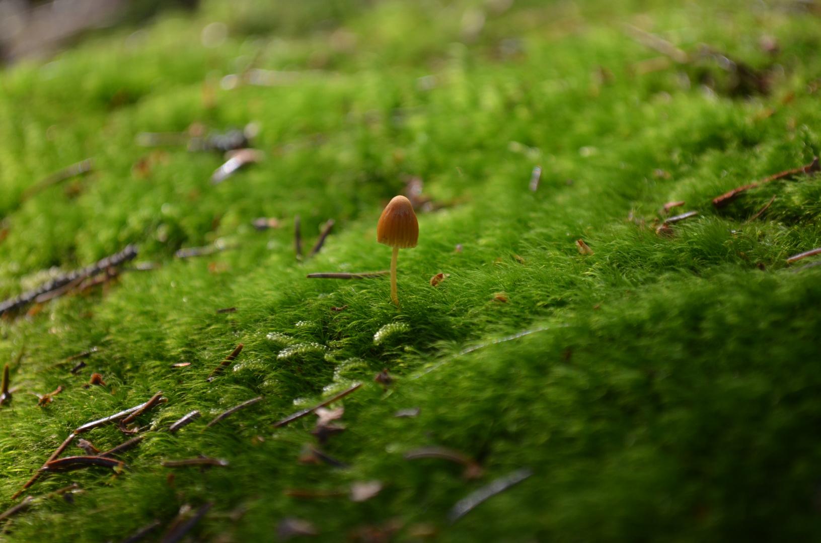 Einsamer kleiner Pilz