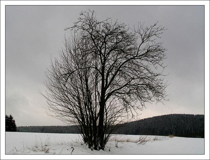 Einsamer Strauch im Winter