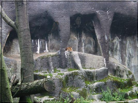 Einsamer Tiger!