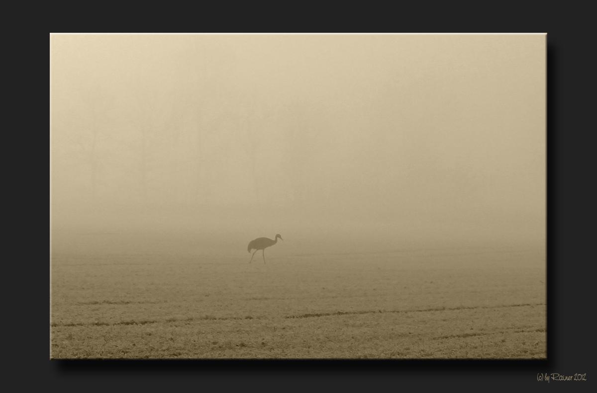 """Einsamer """"Wanderer"""" im Nebel"""