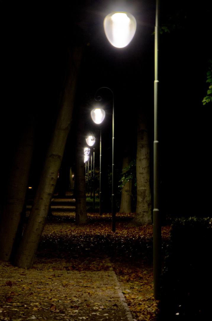 einsamer Weg durch den Tiergarten