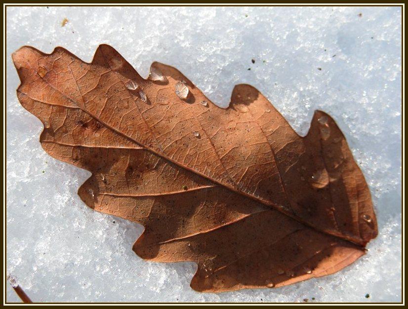 Einsames Blatt im Schnee