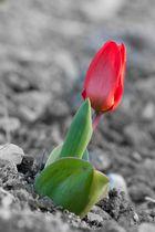 Einsames Frühlingserwachen