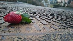 Einsames Obst
