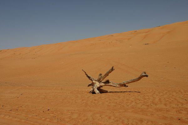 Einsamkeit in der Wüste