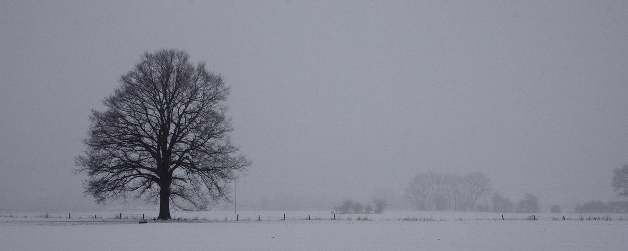 einsammer Baum im Feld