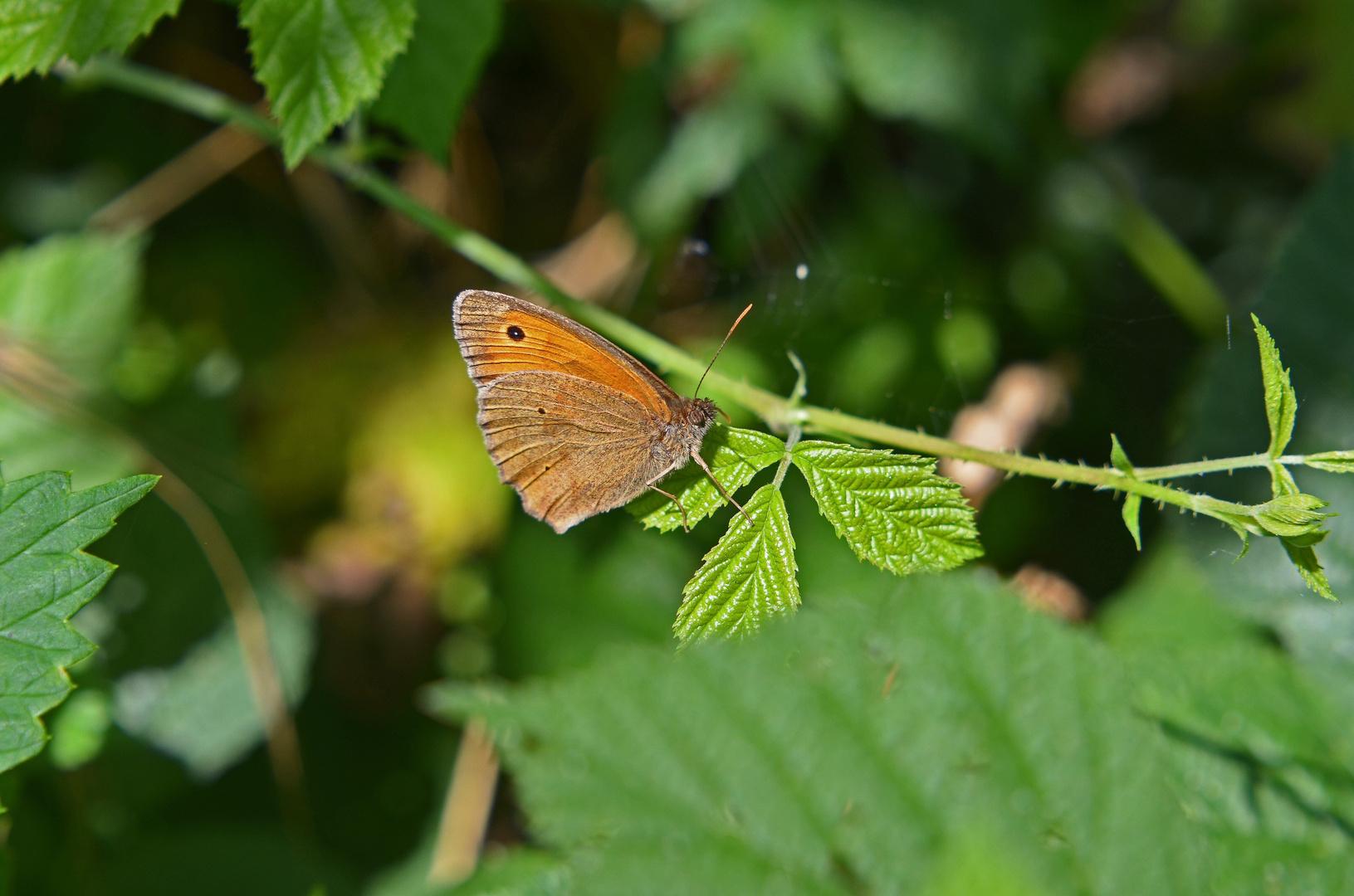 Ein...........Schmetterling ;-)