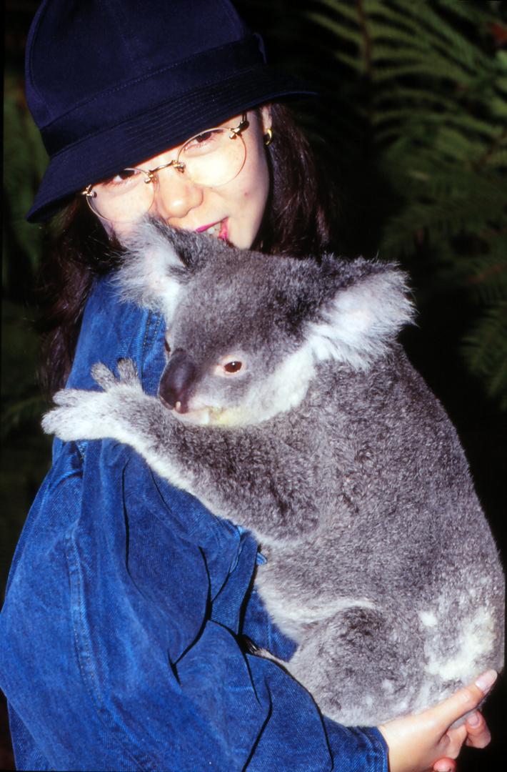 Einseine Japanerint in Briban mit dem koala