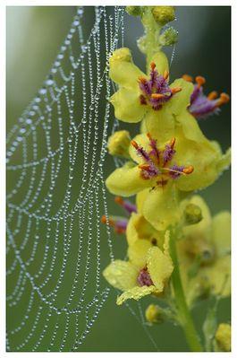 Einseitiger Insektenschutz - oder; mit Blütenduft erfolgreicher