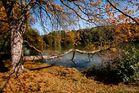 Einstimmung auf einen bunten Herbst
